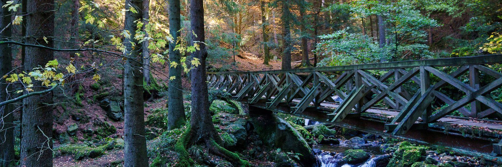 Gemütliche Spaziergänge durch die Zillertaler Wälder