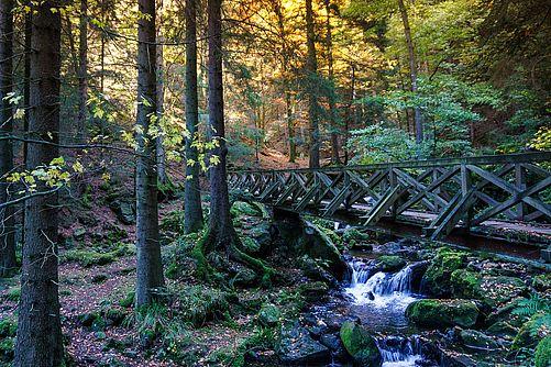 Idyllic forest path behind the Villa Haidacher leads to Talbach waterfall