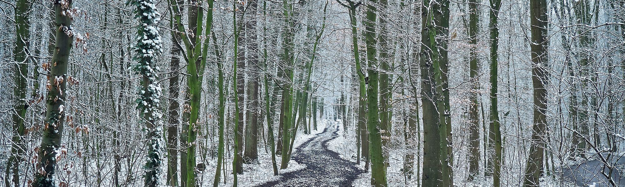Winterspaziergänge durch die verschneiten Wälder